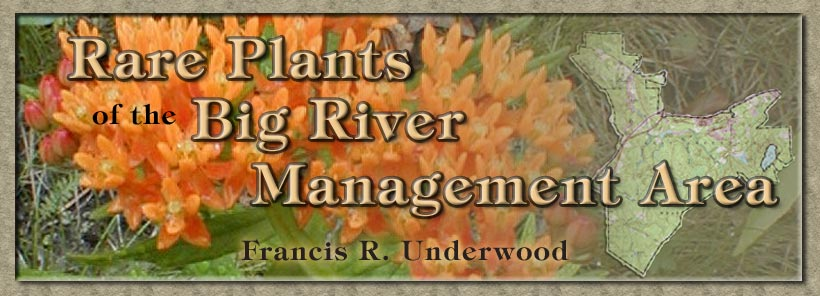 Rare Plants of the Big River Management Area